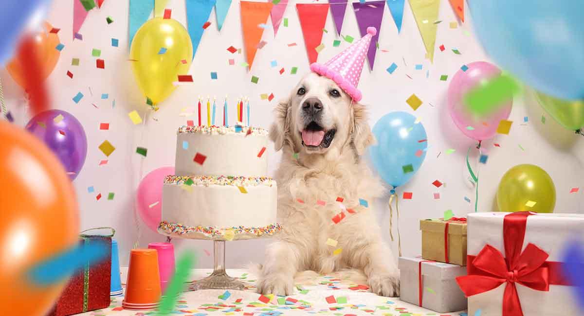 urodziny-psa.jpg